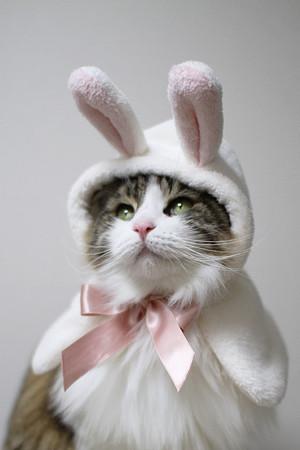 cat_costume-6