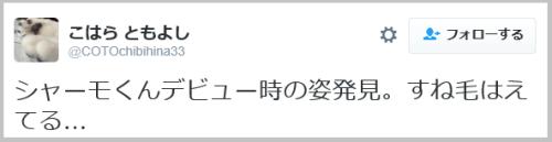 kawamata_shamo-10