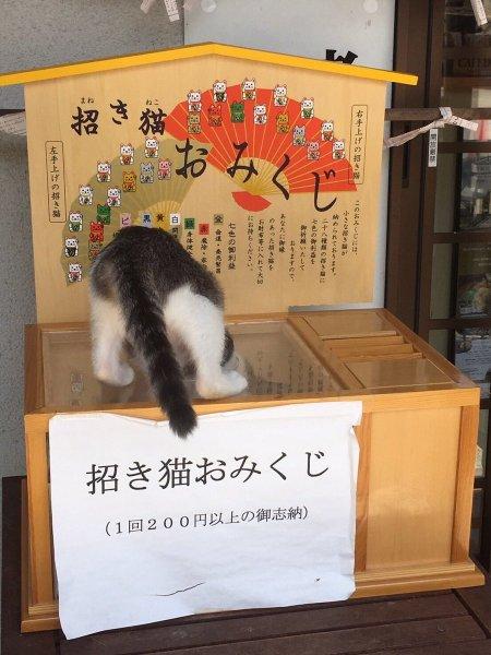 manekineko_omikuji (1)
