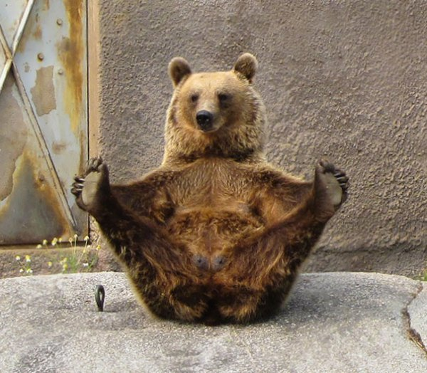 yoga_animal (2)