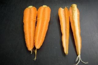 carrot_todachi-2