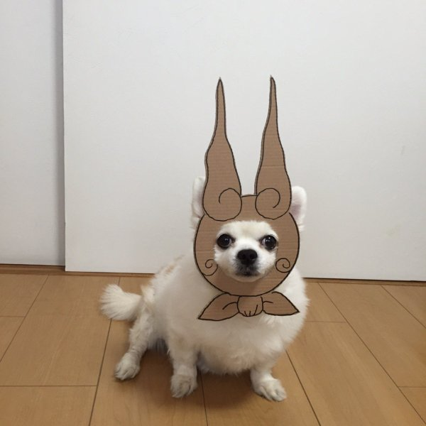 danborudog-3