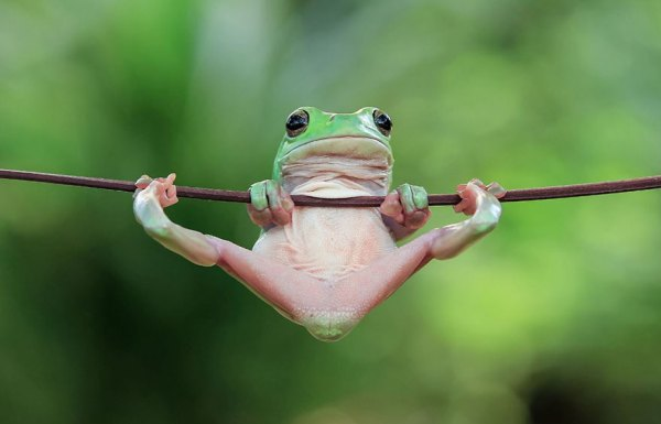 tantoyensen-frog-8