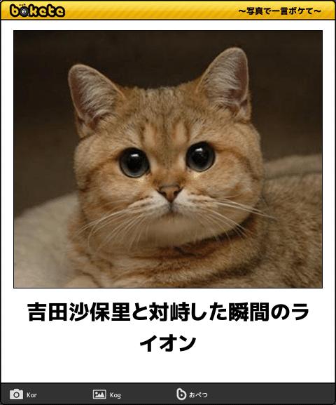 yoshidasaori-bokete-1