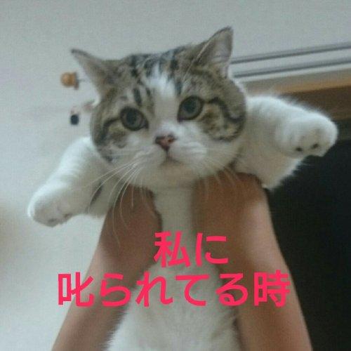 cat-aikyo (1)