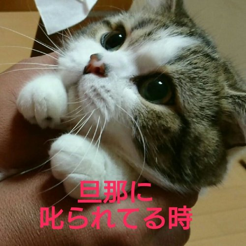 cat-aikyo (2)