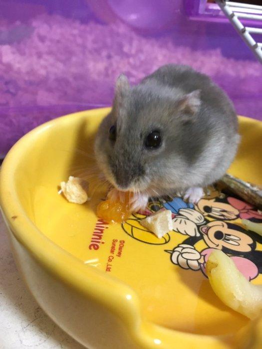 hamster-niboshi-2
