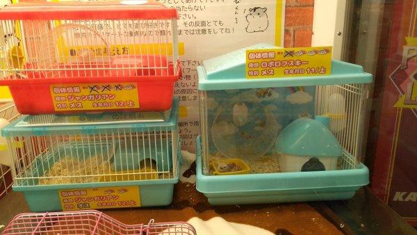 hamsterUFO (1)