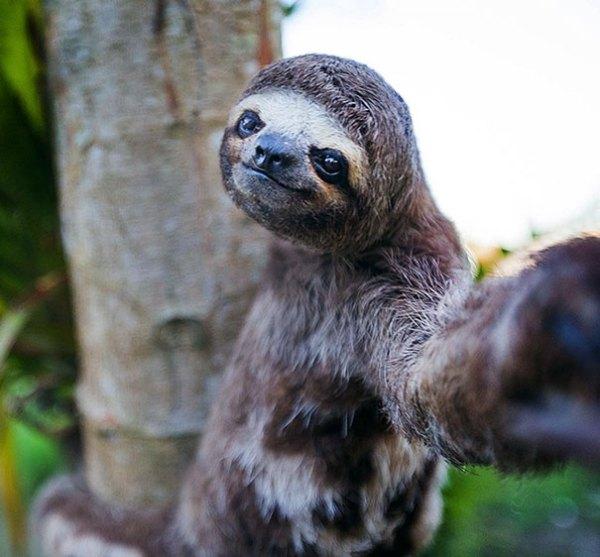 selfieanimal (3)