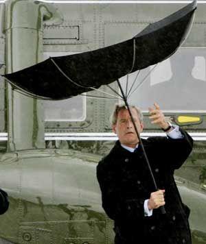 umbrella-bush (2)