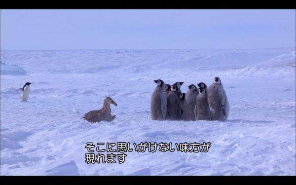 カモメVSペンギンの雛 絶体絶命...