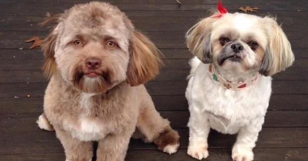 画像 「この犬、人間の顔をしている!」 Yogiが世界中の人気者に