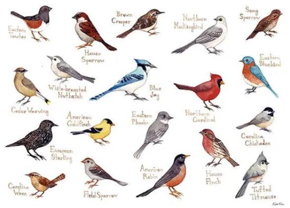 Bird Watching hindi, bird watcher hindi, bird watcher kon hote he, bird watching kya hota he, pakshi drashta, pakshi dekhna, birding in hindi, bird watching hobby hindi, benefits of bird watching