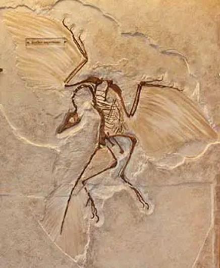 Birds are dinosaurs hindi, birds evolved from dinosaurs hindi, birds and dinosaurs, how birds evolved hindi, birds are cousin of dinosaur hindi, Archaeopterix in hindi,