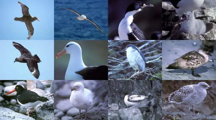 पेंग्विन ही नहीं कई पक्षी रहते हैं बर्फीले अंटार्टिका में !