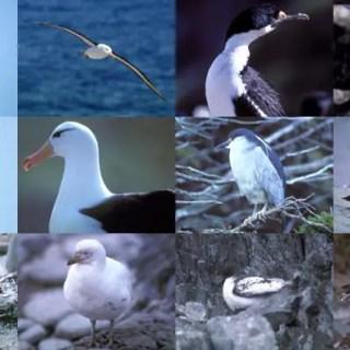 birds of antarctica hindi, antarctica birds hindi, ठंडी जलवायु के पक्षी, thandi jalvayu ke pakshi, snow birds hindi, pakshiyon me anukulan, adaptation in birds hindi