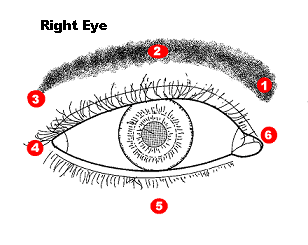 eye ke liye acupressure points