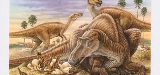 Dinosaur care for young hindi, dinosaur parenting habits hindi, dinosaur cared for their young hindi, essay on dinosaur parenting hindi, dinosaur took cared hindi,