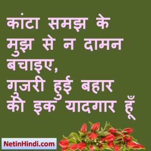 Bahaar whatsapp status, Bahaar whatsapp status in hindi, whatsapp status Bahaar, Bahaar facebook shayari कांटा समझ के मुझ से न दामन बचाइए,  गुजरी हुई बहार की इक यादगार हूँ !!