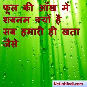 Shabnam shayari status, Shabnam shayari pics, Shabnam shayari images, फूल की आँख में शबनम क्यों है  सब हमारी ही खता जैसे  ~बशीर_बद्र
