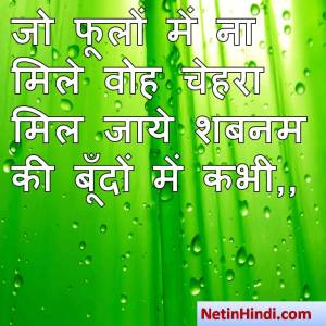 hindi Shabnam status, status in hindi for Shabnam जो फूलों में ना मिले वोह चेहरा  मिल जाये शबनम की बूँदों में कभी,,