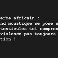 Violence moustique: Proverbe africain...