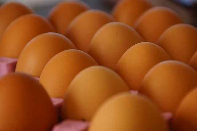 Egg tray Making Machine - New Business trend small scale business small business small business trends small business trending ideas