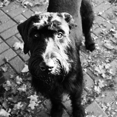 Stacy final doggie