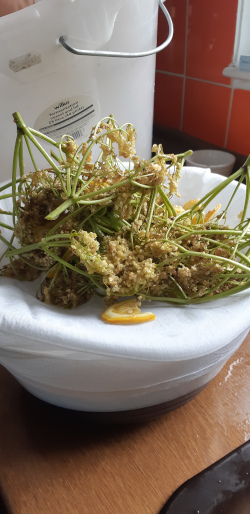 Step 12 - Use a slotted spoon to remove large elderflower heads
