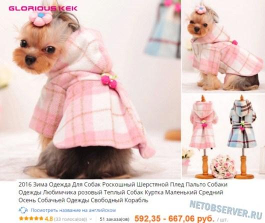 Необычная одежда для собак