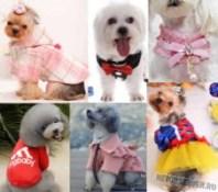 Необычная одежда для собак на Алиэкспресс - logo