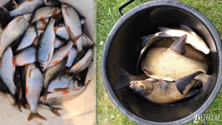 pêche de gardons et pêche de bremes a la belle saison sur le parcours de compétition de rille