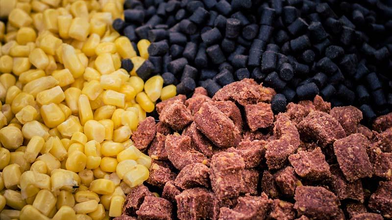 amorce maïs pellet préalable pour pêcher la carpe au coup en rivière