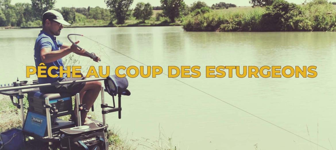 pêche au coup esturgeon combat puissants specimens carpodrome