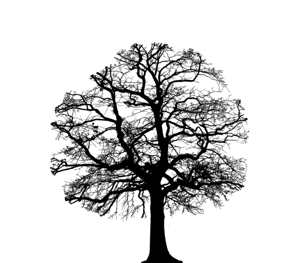 silhouette of a tree with its crown reduced