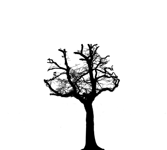 silhouette of a tree which has been pollarded