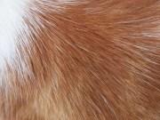 animal hair texture netrender