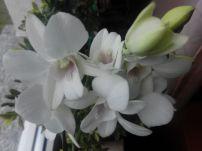 Wiko-DARKFULL-Kamera-Nahaufnahme-Blumen