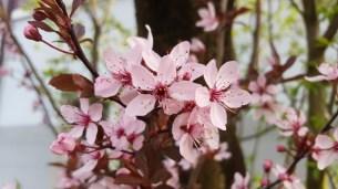 Blüte ohne Objektiv