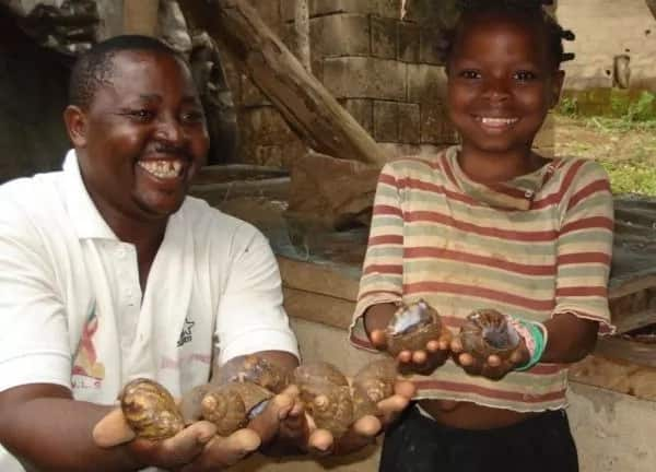 Rearing snails at home in Nigeria