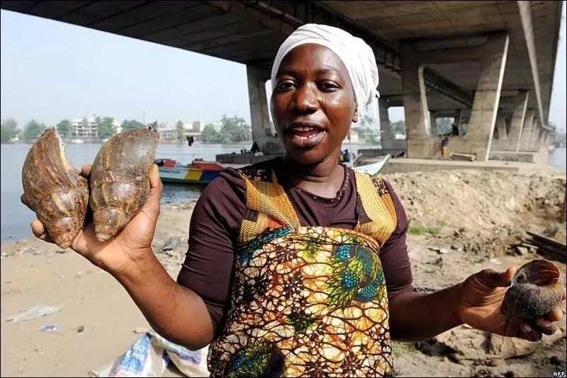 Snail business in Nigeria