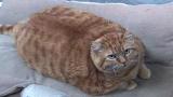 Most Outrageous: Fat Cat