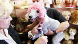 Most Outrageous: Dog Wigs