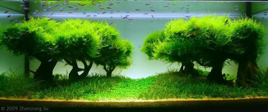 Aquarium Designs zum Integrieren in der Wohnung