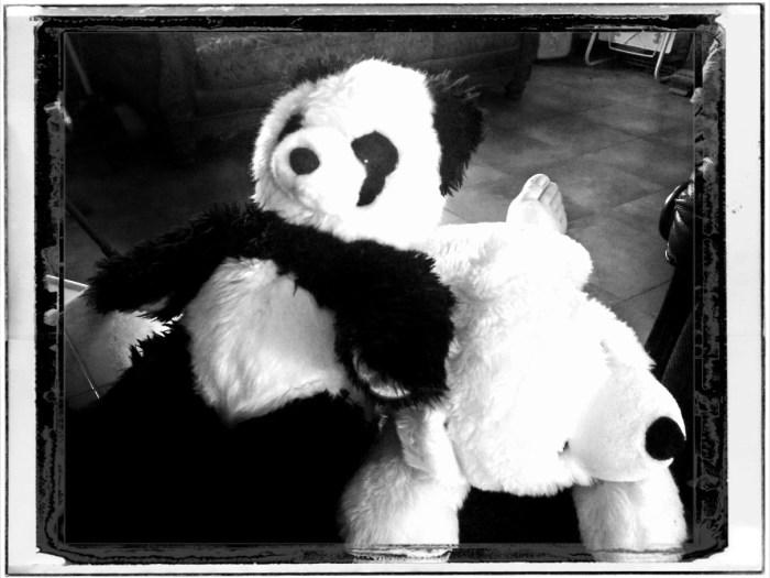 Panda Polar
