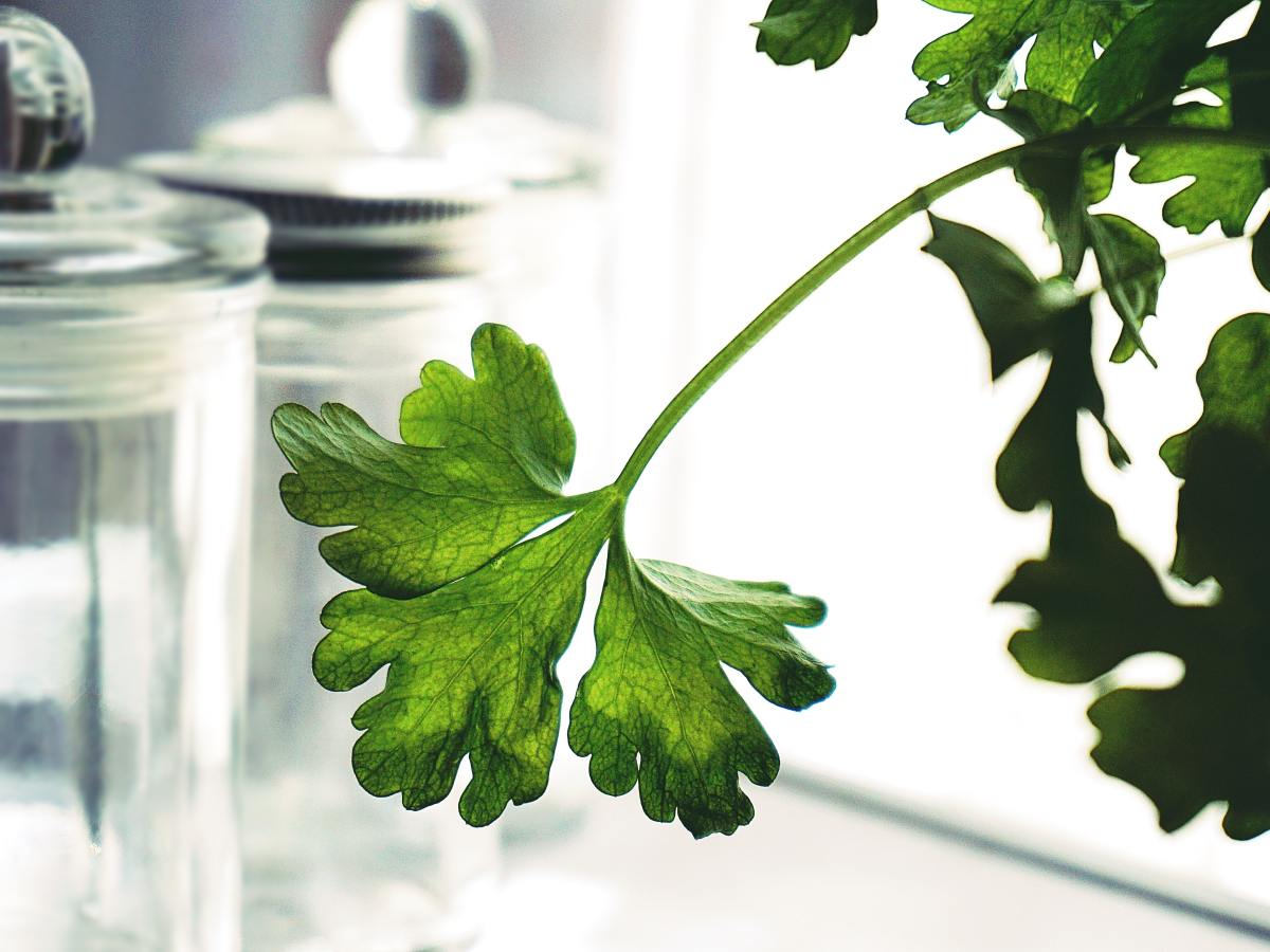Find out about three common myths surrounding natural medicine.