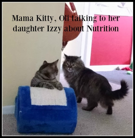 Purina Pro Plan Nutritious Cat Food