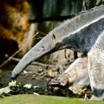 geheimdienst-kontrolle-ameisenbär