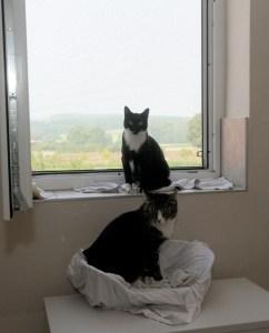 Katzenraum