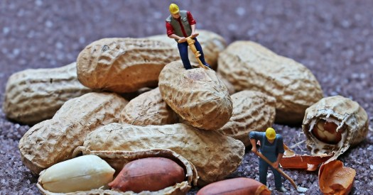 Peanuts with miniature workers figures - allegory to Minister Spahn's decision criticed in the article